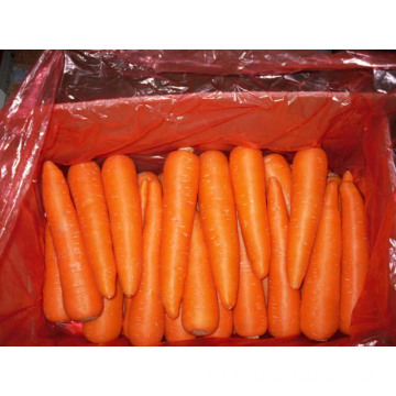 Big Sizes 250-300g Fresh Carrot In Carton